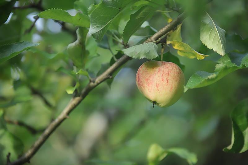 Abfallwirtschaft Schleswig Flensburg Kostenloses Obst